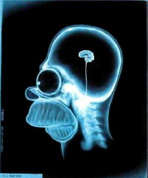 20110415232700-homer-cerebro.jpg